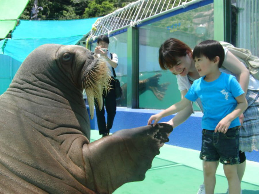 Sea life petting zoo,