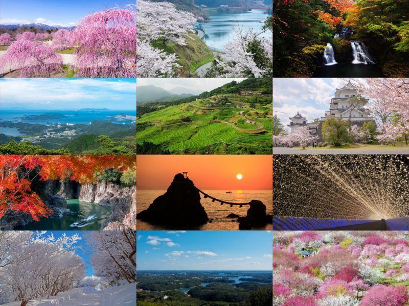枫叶、樱花、梅花……拍照打卡景点大集合!