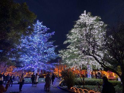 整个关西的女孩都向往的告白圣地——名花之里,冬季点灯有多浪漫?