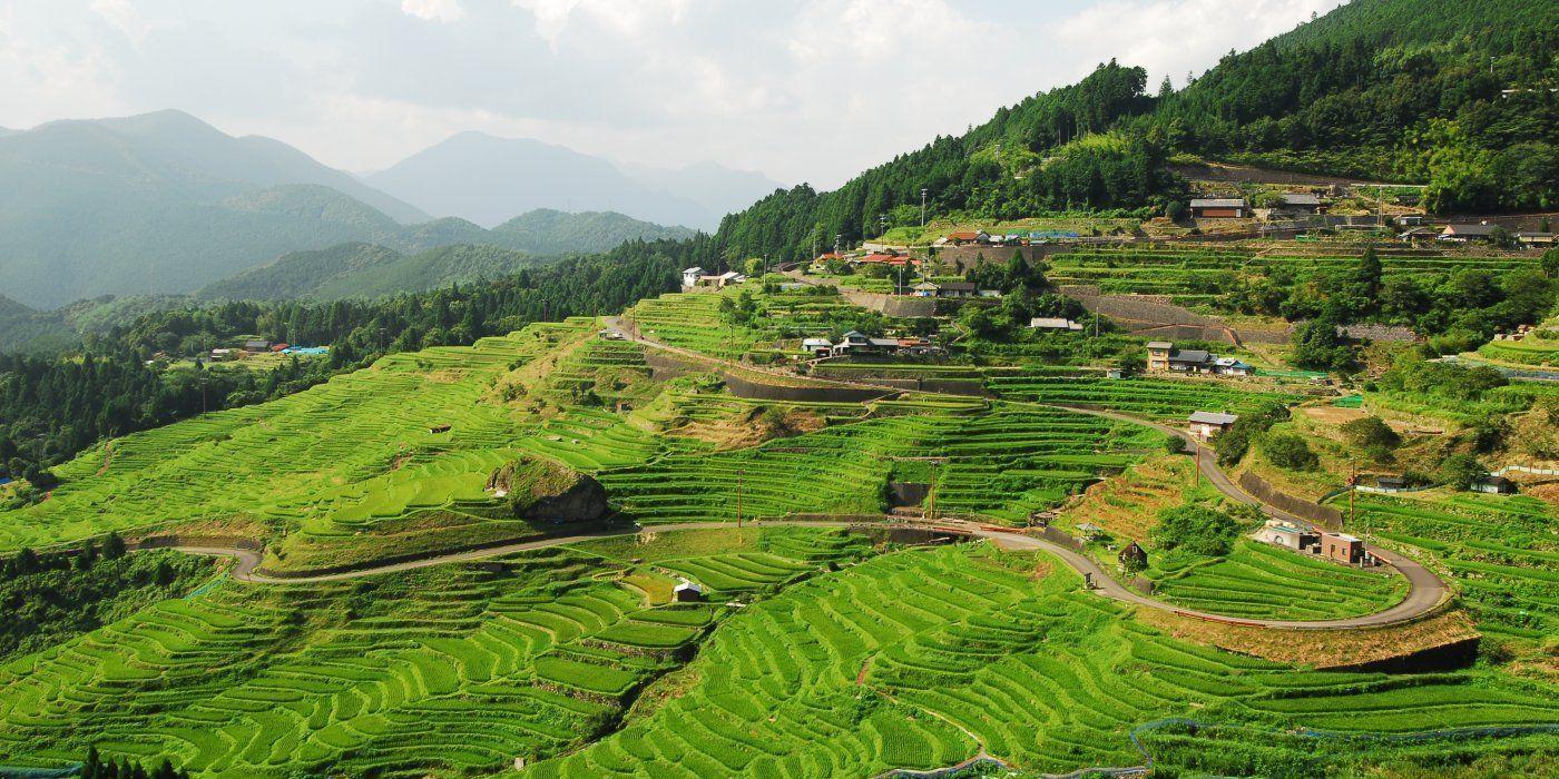 入选日本梯田百选的绝美景观