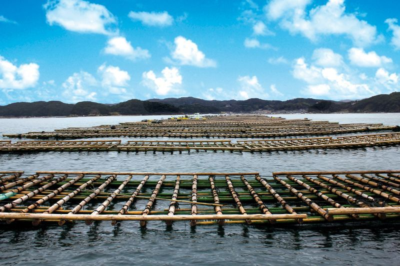 Helpful tips to know about Uramura oysters and how to eat at the Oyster Huts.