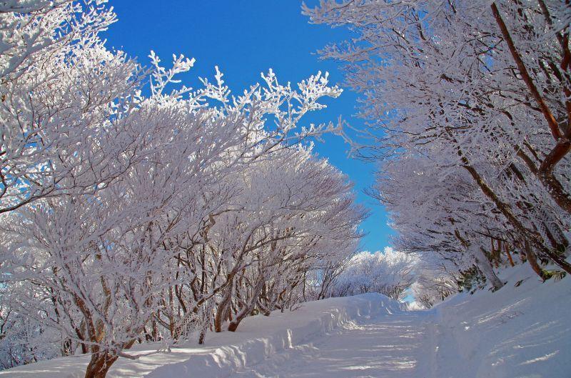 Mt. Gozaisho/Gozaisho Ropeway