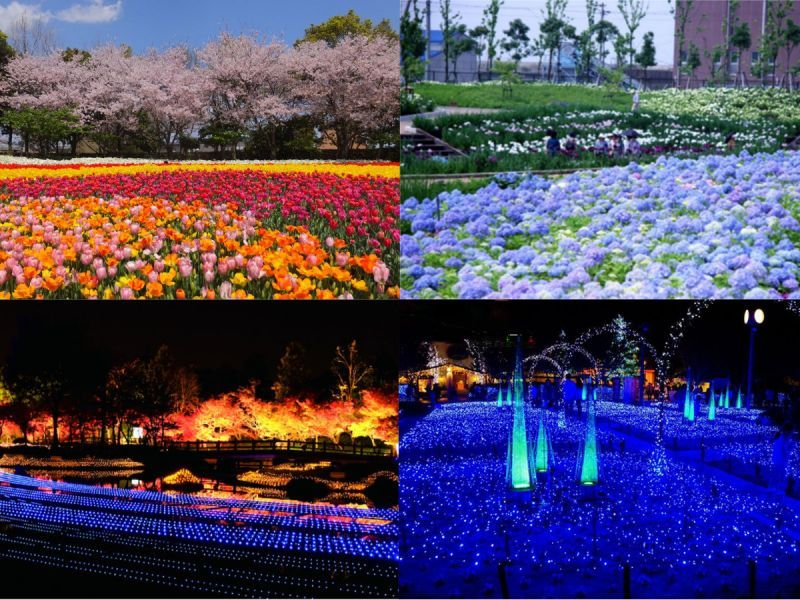 """World's most spectacular view! """"Nabana-no-Sato"""" for (its) flowers and illumination"""