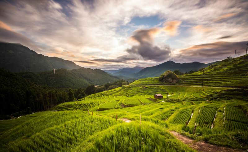 "The ""Thousand Rice Terraces"" of Maruyama Senmaida"