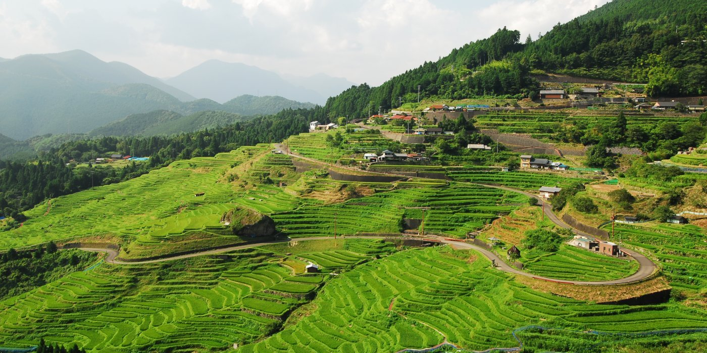 The spectacular view which was chosen as one of the 100 most beautiful terraced rice fields of Japan