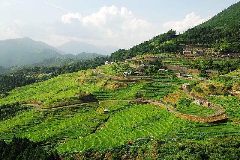 Campos de arroz en terrazas de Maruyama-Senmaida