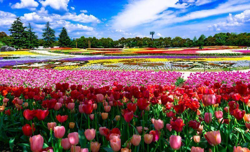 Innumerables flores en plena floración. Los paisajes de cada estación son tan hermosos como cuadros.