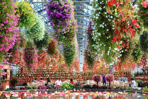 ¡Floreciendo todo el año! El Jardín de Flores de los Andes-Jardín Begonia