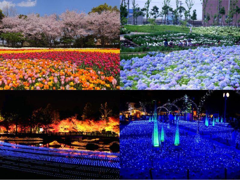 想看世界級美景,就來結合花朵與燈飾的「名花之里」!