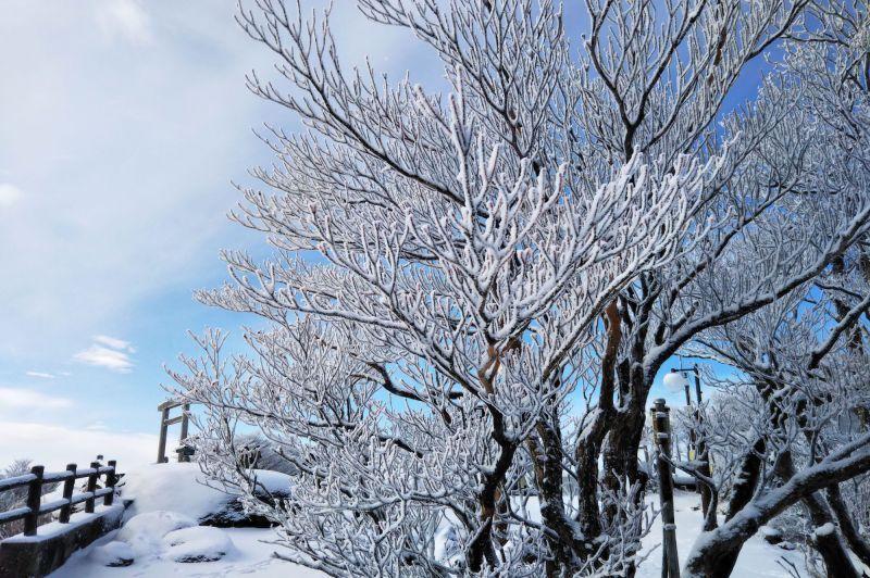 冬天有浪漫樹冰,深秋有滿山楓紅!四季景色千變萬化的雲上美境「御在所纜車」+「御在所山上公園」。