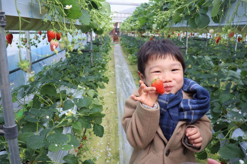 讓人流連忘返的四季美景,令人口水直流的當季美味,雙重享受,一次滿足——青蓮寺湖觀光村 葡萄&草莓農園